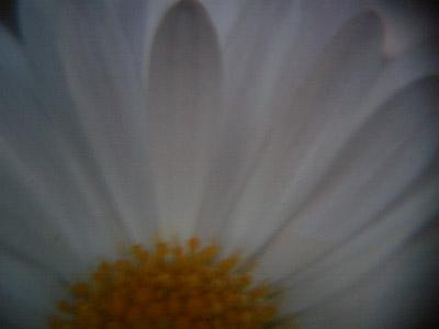 20100602_3.JPG